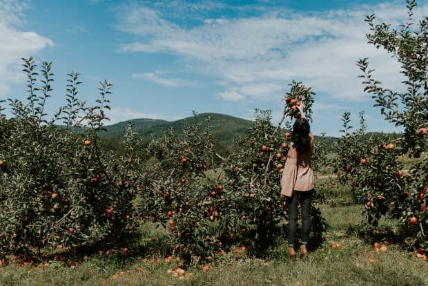 Outdoor Family Photos - Apple Picking