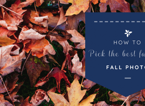 How to pick the best family fall photo?